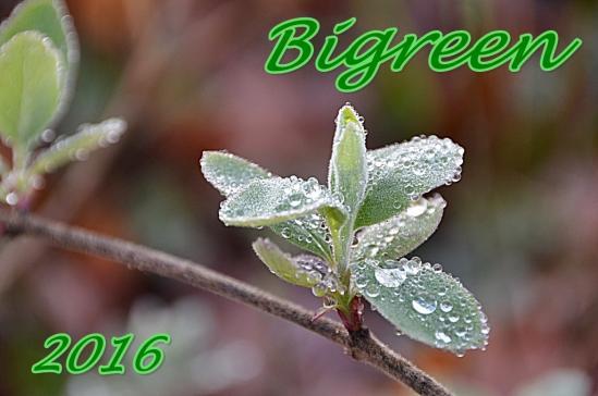 Bigreen tane 2016 1a